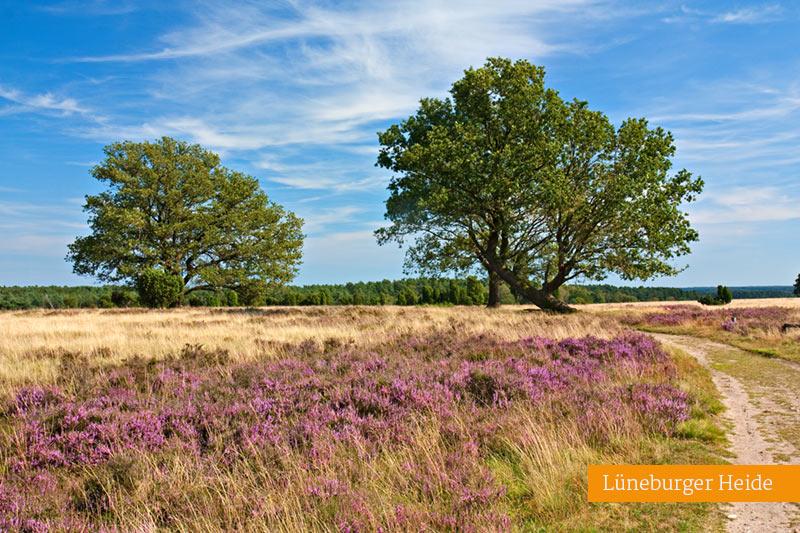 Lueneburger Heide Stellplatrz